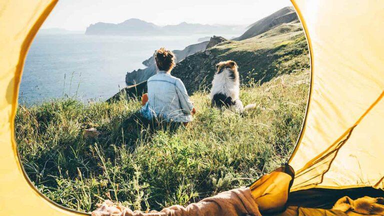 犬と一緒に旅行に出かけて遠くを見つめる人